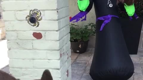 Dog scared of halloween monster decorations