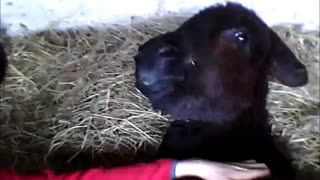 Donkey makes hilarious face when scratched - Video