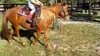 5yr old cowgirl rides new pony  - Video