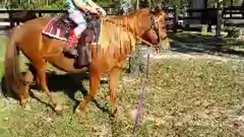 5yr old cowgirl rides new pony
