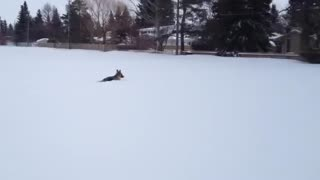 Dog enjoys playtime in deep snow - Video