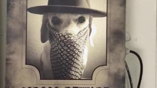 White dog wearing costume