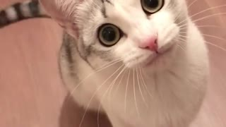 cat with a strange voice