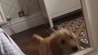 Dog fighting with his own mirror reflection - Video
