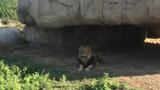 Shot Holding Breath with Lion