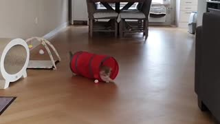 "Cat has fun playing the ""tunnel"" game"