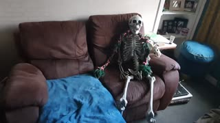 Pup gets scared by spooky skeleton Halloween decoration
