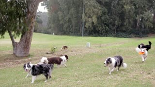 A group of lovely and wonderful dogs