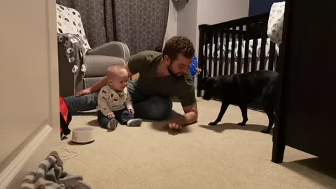 Playful pup sends baby into hilarious giggle fit