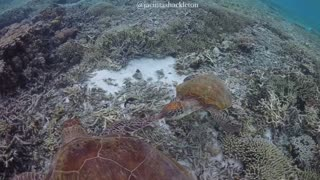Check out this awesome sea turtle footage!