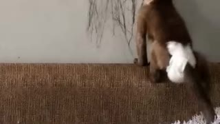 Artistic Monkey Leaves Her Mark on the Wall