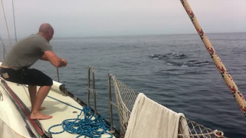 Dolphins pass boat in perfect synchronization