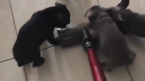 "Watch these puppies ""help out"" with the housework"
