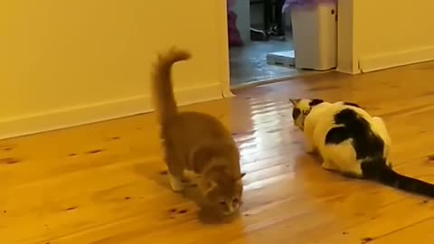 Kitten would rather play with food than eat it