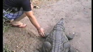Woman Nearly Gets Hand Bitten Off By Alligator - Video