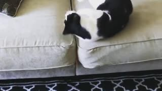 Collab copyright protection - cat toy couch roll fail  - Video