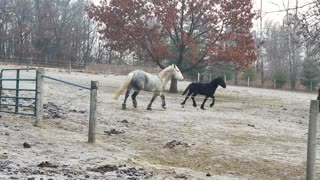 Stunning horse running and playing