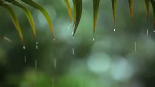 Raindrops Relaxing Piano Music with Tropical Rain Sounds for Sleep, Work or Meditation