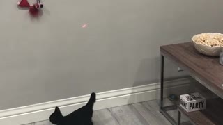 Two small black kittens trying to catch laser on wall - Video