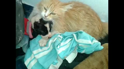 A Mama cat heard a motherless puppy crying !