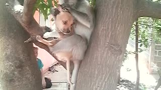 Monkey and Puppy are Unlikely Friends - Video