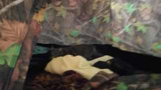 Olive playing in a tent