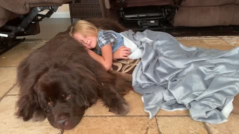 Newfoundland dog makes for the perfect resting spot after girl's first day of school
