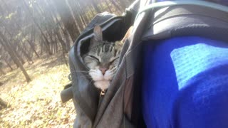 This 20-year-old cat absolutely loves to go hiking
