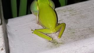 Frog on Handrail Makes a Ruckus