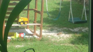 Happy bird enjoys backyard sand bath - Video