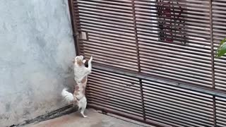 Clever Canine Gets Caught Making Escape