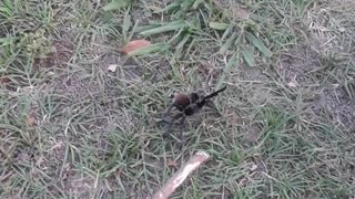 Cat protects his new friend a trantula