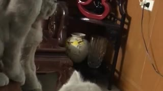 the cat seen world cup  - Video