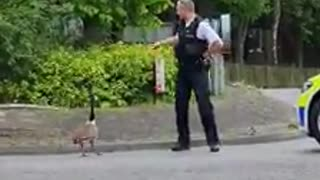 Police safely escort geese across a busy road