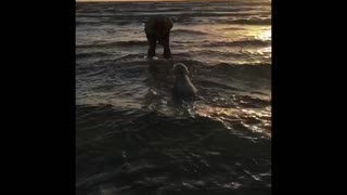 Puppy's first time at the Beach  - Video