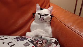This cat looks totally smart wearing glasses.  - Video