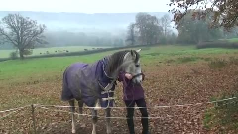 Owner Has Been Away For Weeks, Watch The Horse's Reaction !