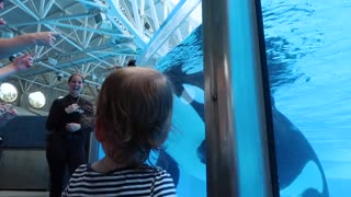 Little girl's Orca meets the real thing - 'Killer Whale Up-Close Tour' at SeaWorld Orlando