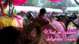 Buffalo Wedding - Video