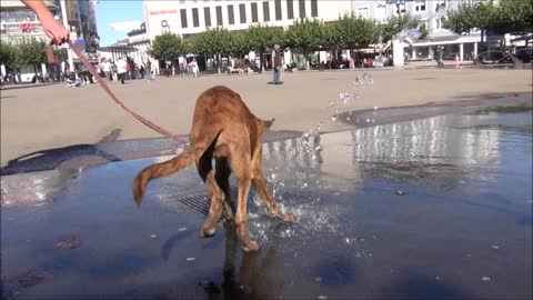 Funny dog wants to catch the water