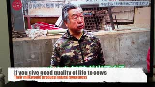 Sweet Japanese Farmer Handling Cows with Names Will Melt Your Heart  - Video