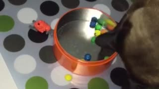Cat enjoys playtime with M&M's