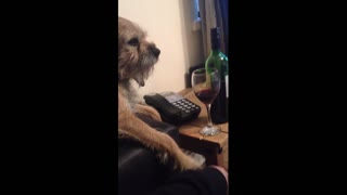 Dog Stops Owner From Having Any More Wine - Video