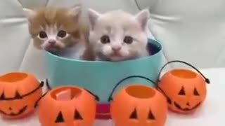 What a purrrfectly adorable treats - Video
