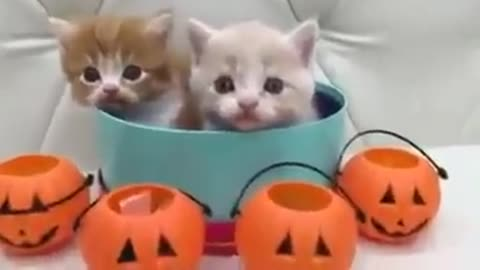 What a purrrfectly adorable treats