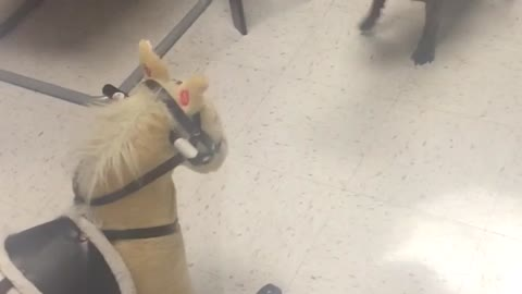French Bulldog not fond of rocking horse