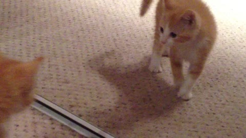 Kitten sees himself in mirror for first time