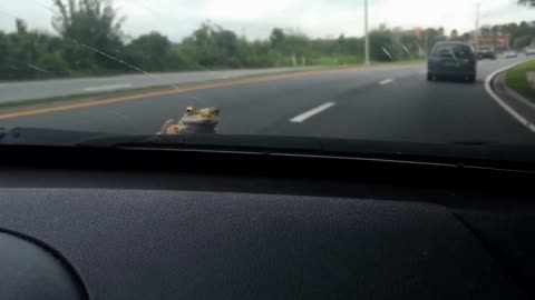 Lady accidentally picks up unwanted hitchhiker