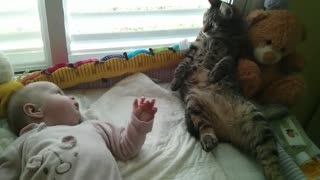 Confused cat not sure how to handle baby