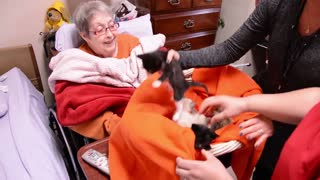 Hospice patient receives dying wish when caretakers hand her basket of kittens - Video